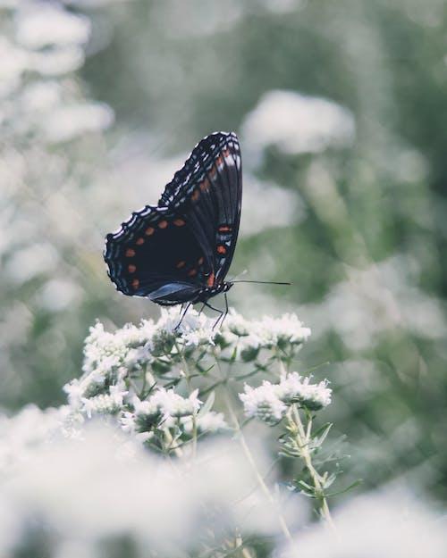 Gratis lagerfoto af antenne, blad, blomst