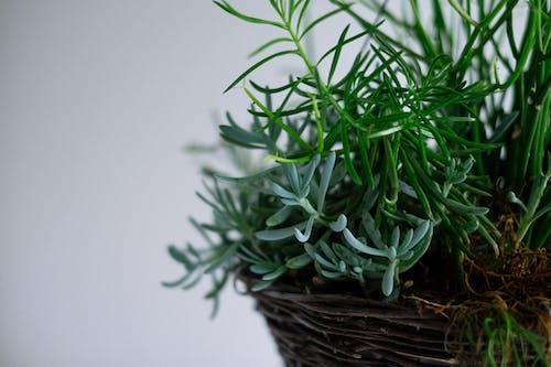 Foto d'estoc gratuïta de planta, planta en un test, verd