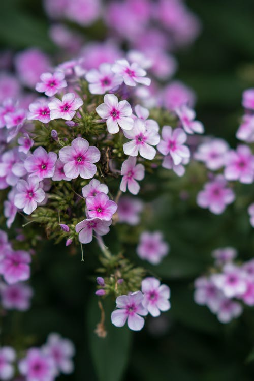 Blooming flower in summer garden