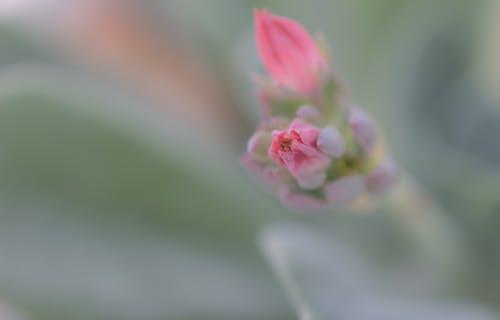 Gratis stockfoto met bloem, bloesem, fabriek, plant