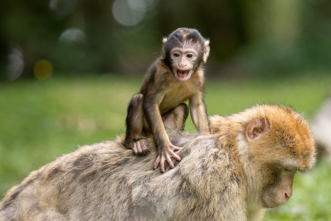 Two Monkey on Grass