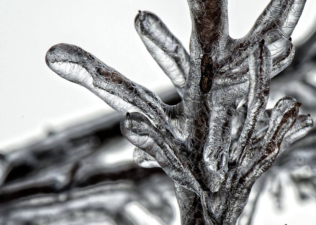 ветви, дерево, дизайн