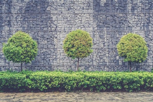 Green Leafy Trees in Front of Gray Brick Wall