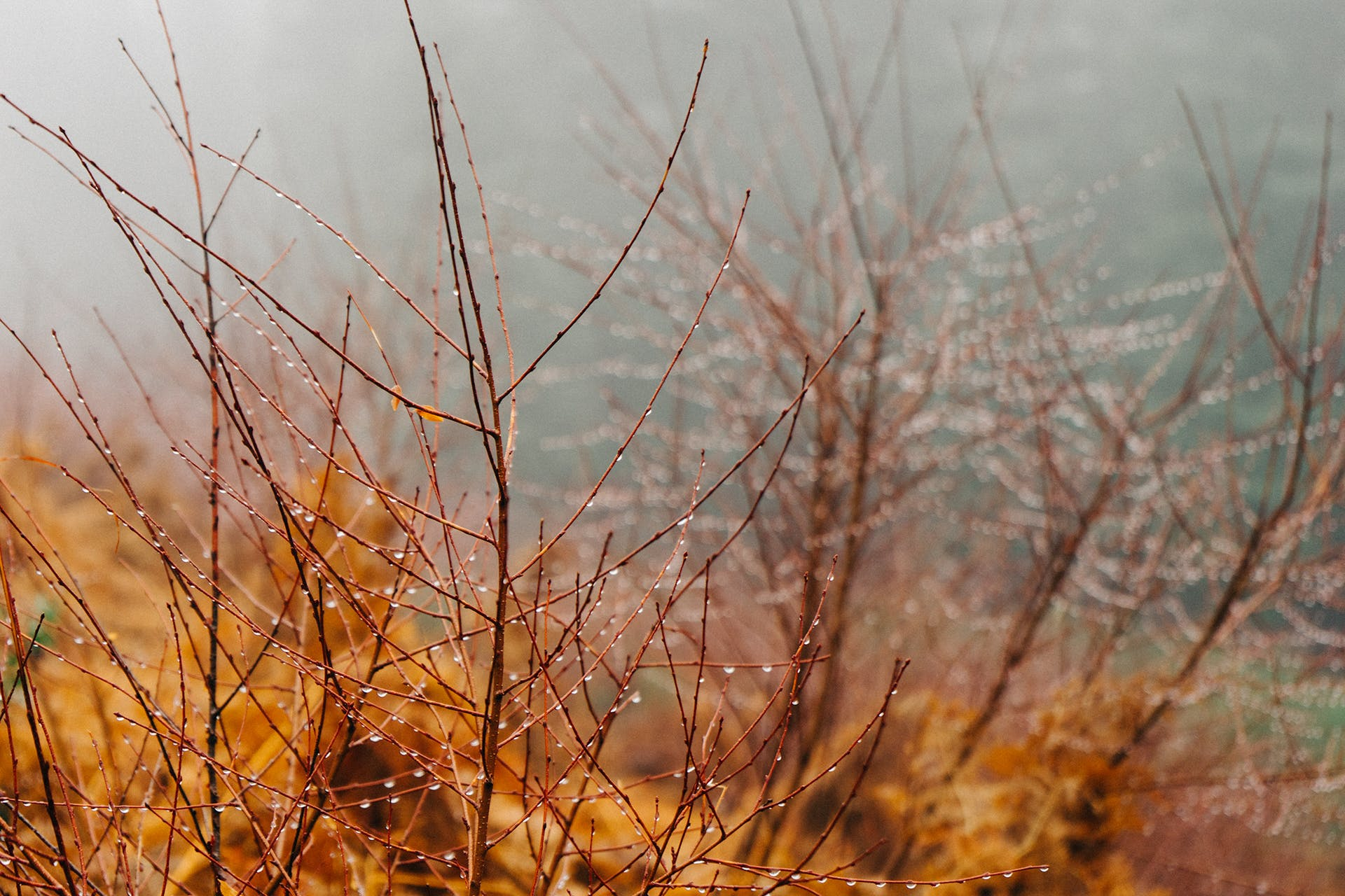 Free stock photo of rainy, branches, dew, rain