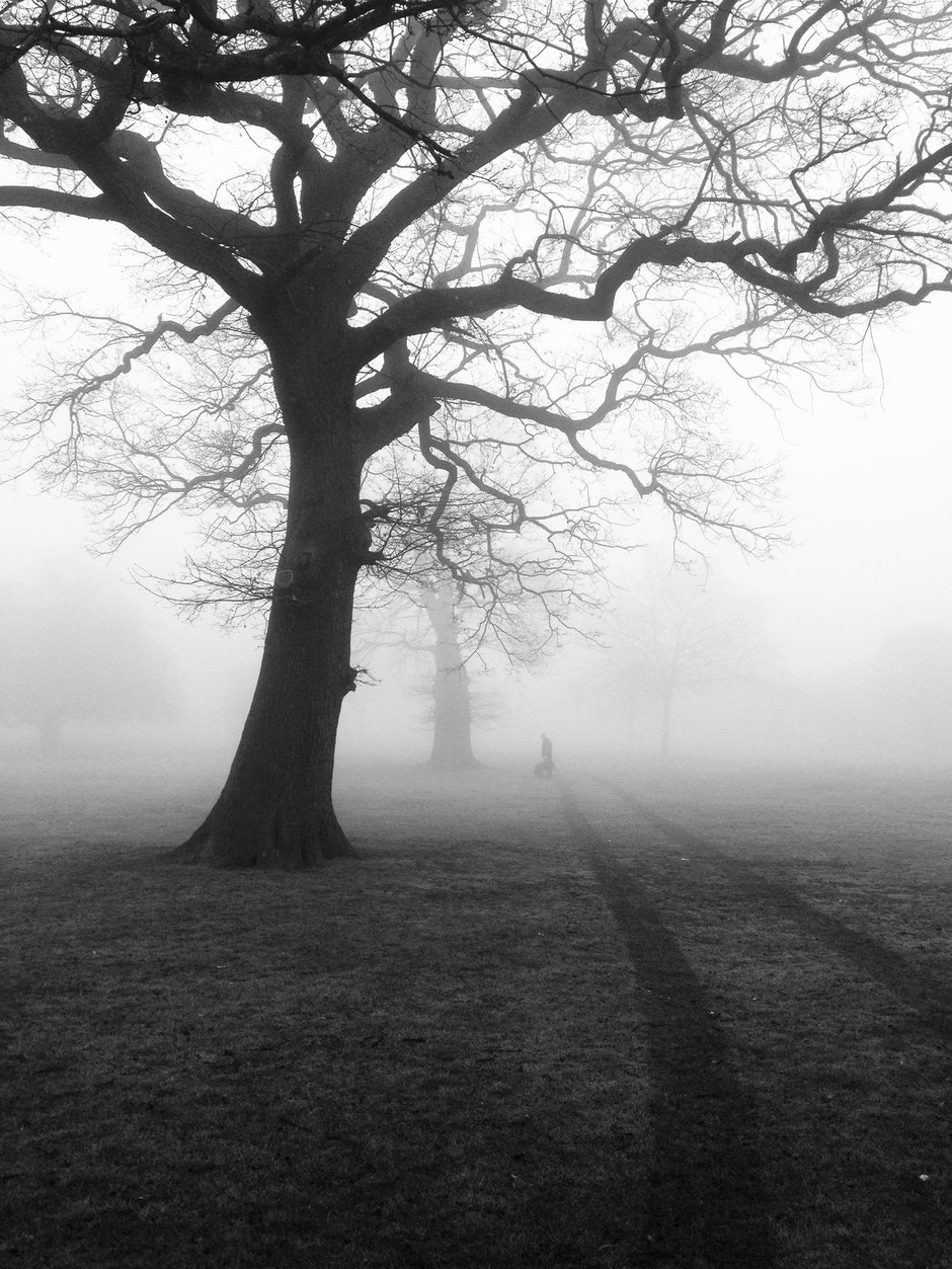 black-and-white, eerie, fog