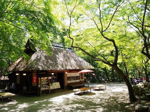 Бесплатное стоковое фото с 主題 公園, 樹木, 樹林