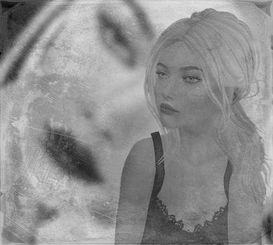 Free stock photo of black & white