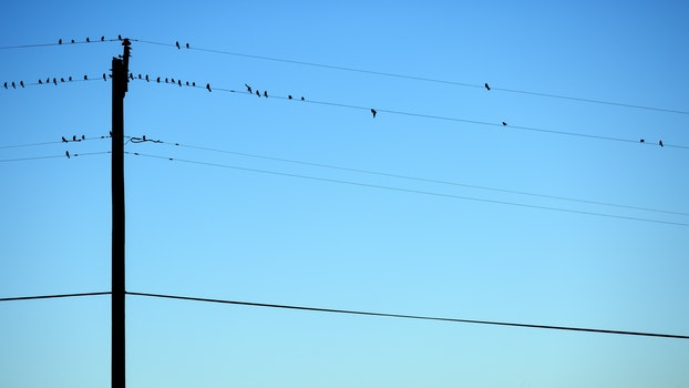 Post With Wire and Bird