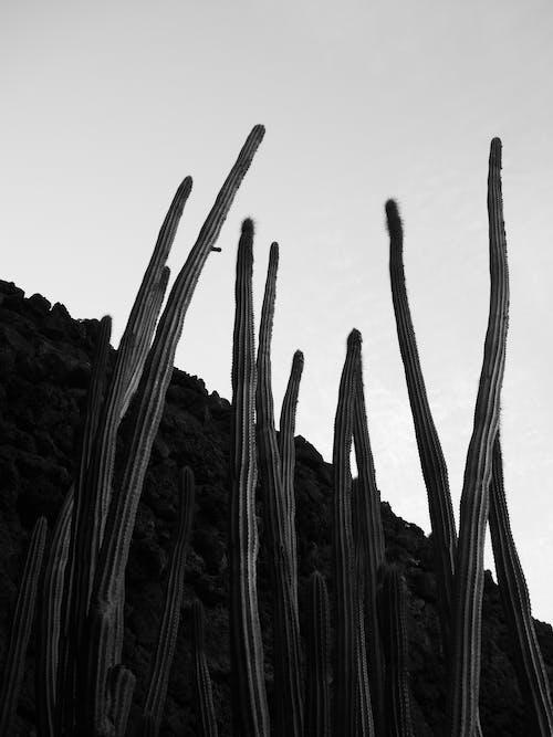 Fotografie bez autorských poplatků na téma černobílá, cestování, estetický, estetický