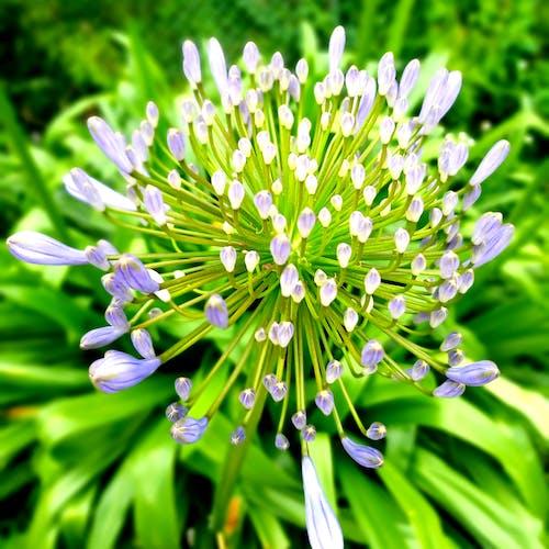 Бесплатное стоковое фото с 植物, 花卉, 花園