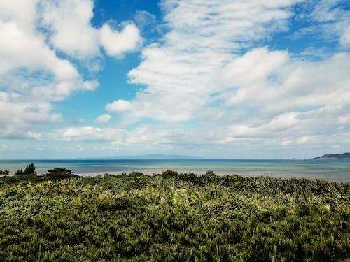 Бесплатное стоковое фото с вода, дерево, лето