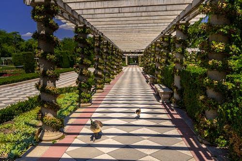 Kostenloses Stock Foto zu cielo, parque, pasillo, pavo echt
