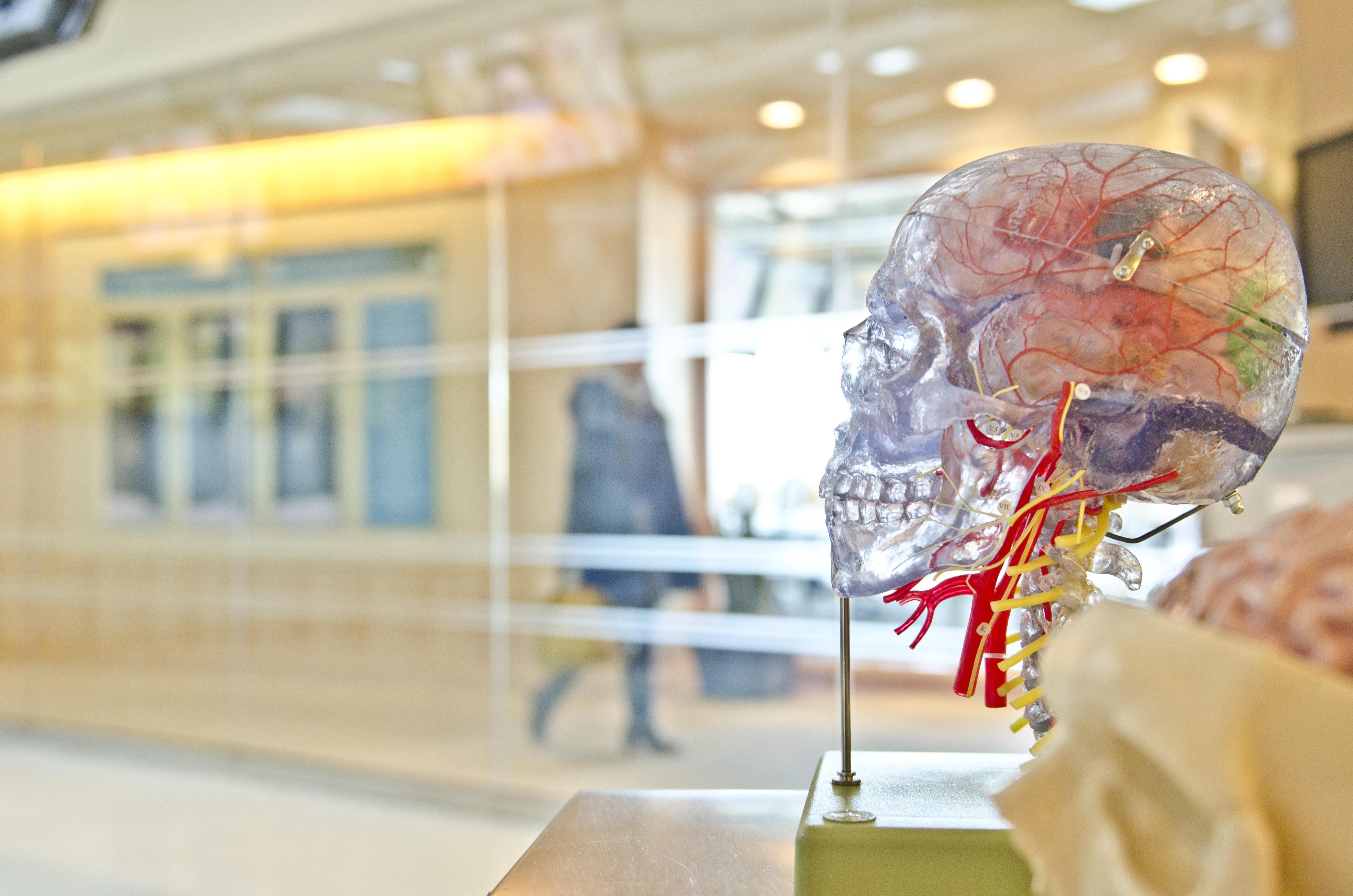 de taal van de hersenen spreken