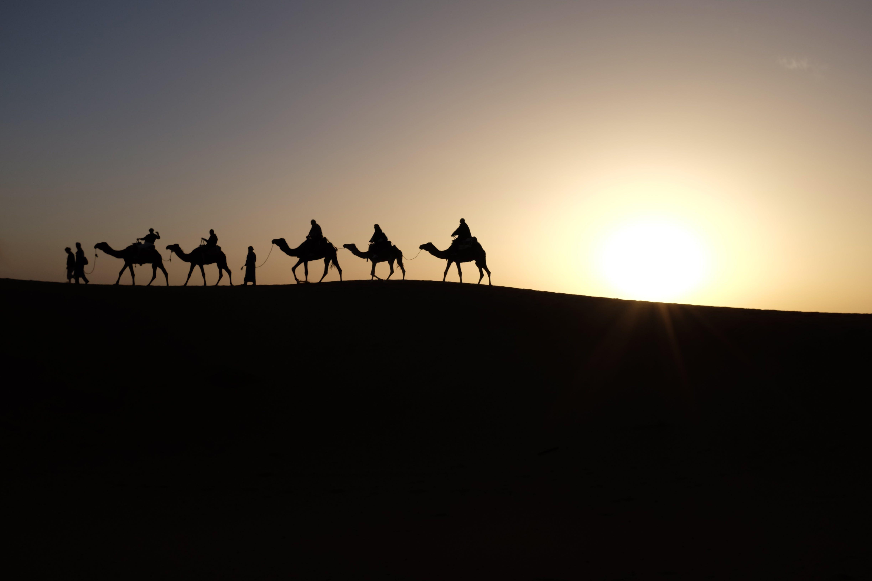 Silhouette of Men Riding Camels on Desert during Sunset