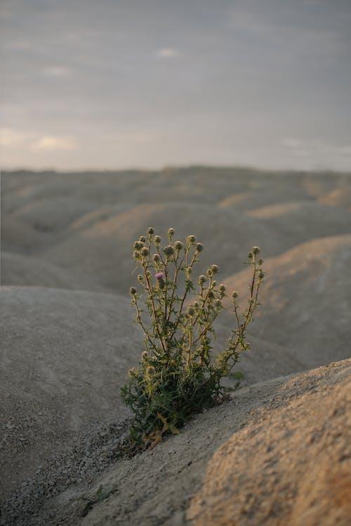 Immagine gratuita di cava, cielo, deserto, duna