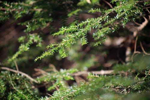 Δωρεάν στοκ φωτογραφιών με γκρο πλαν, δέντρο, κοντινό πλάνο, φύση