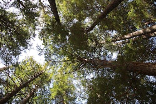 天性, 森林, 樹木, 蟲瞻景觀 的 免費圖庫相片
