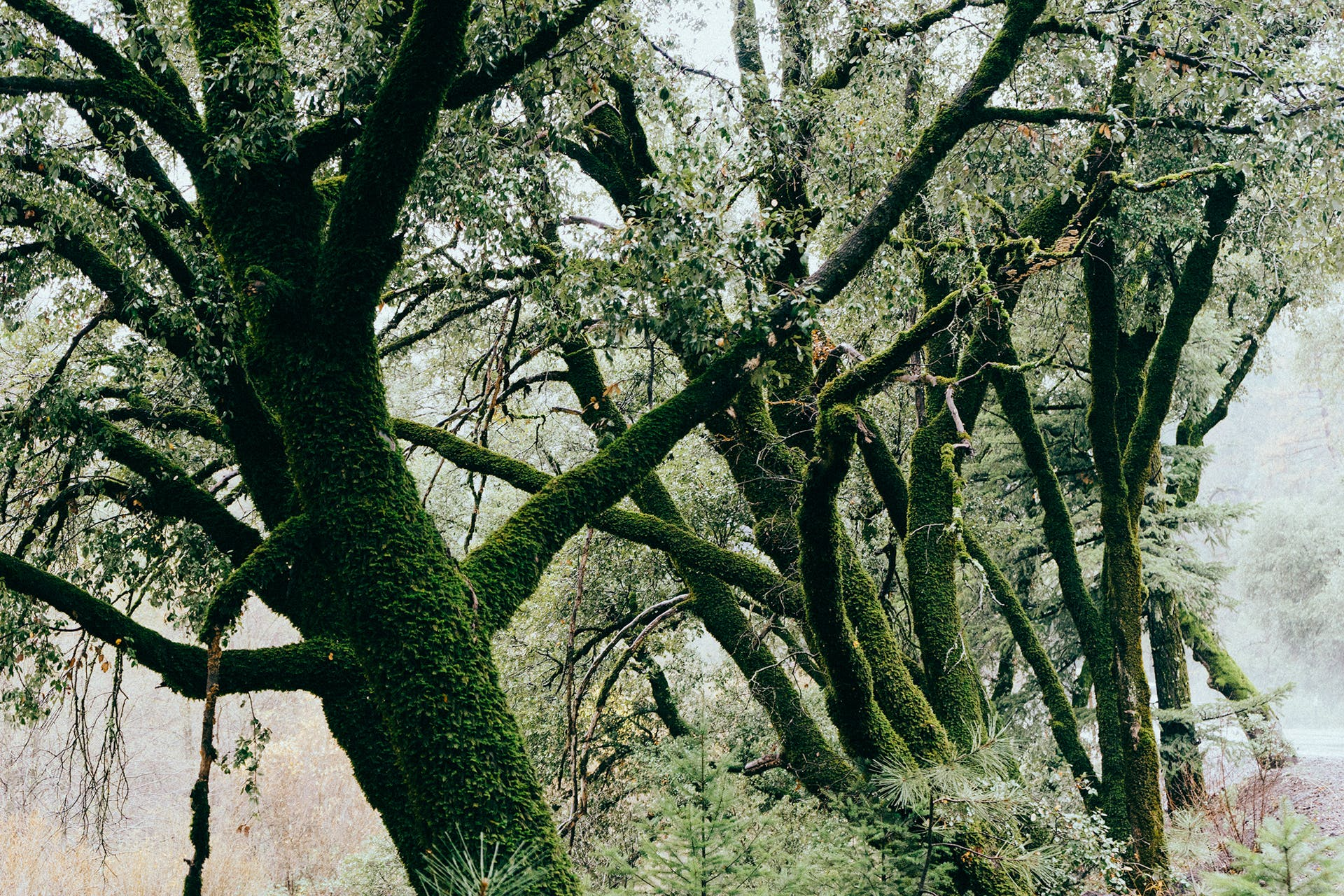 Free stock photo of trees, moss