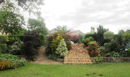 Free stock photo of steps leading into, zirimbuga gardens