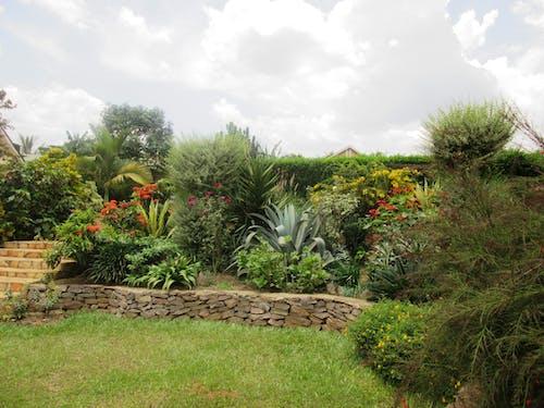 Free stock photo of ziribuga gardens