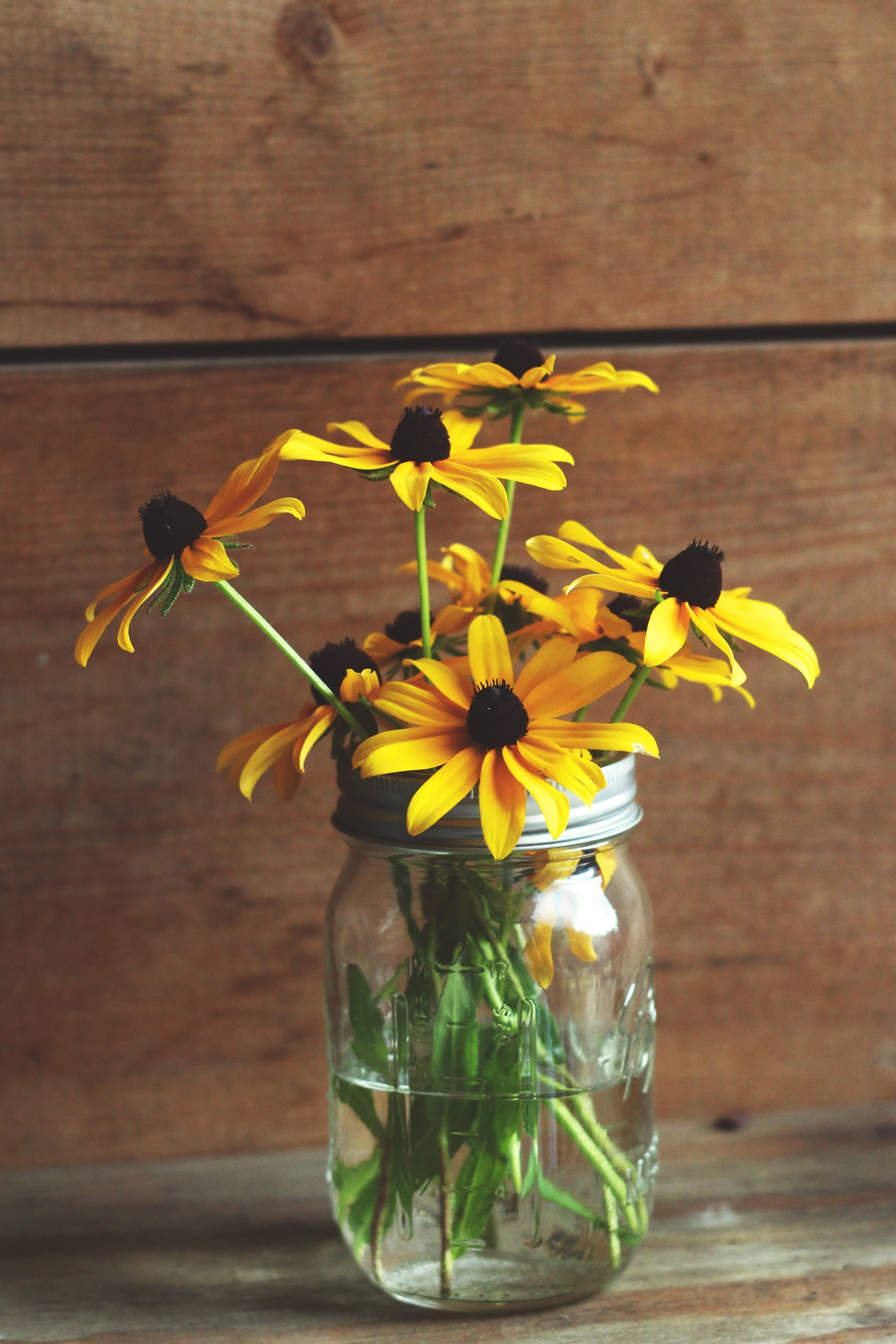 Free stock photo of flowers, yellow, glass, spring