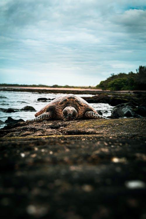 Brown and White Sea Shell on Seashore