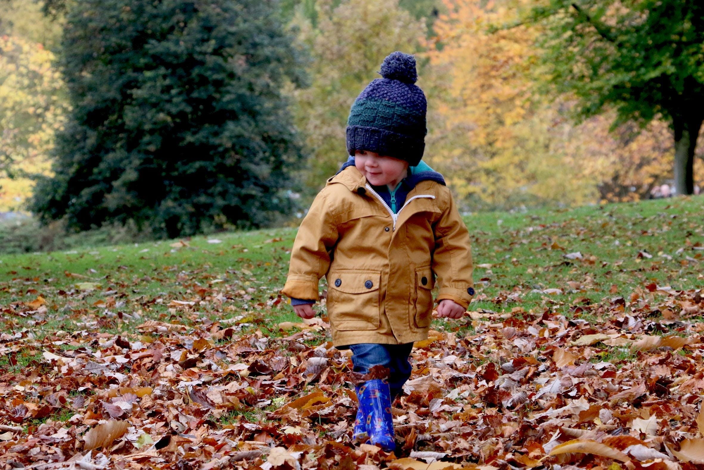 Free stock photo of cute, playing, autumn, fall