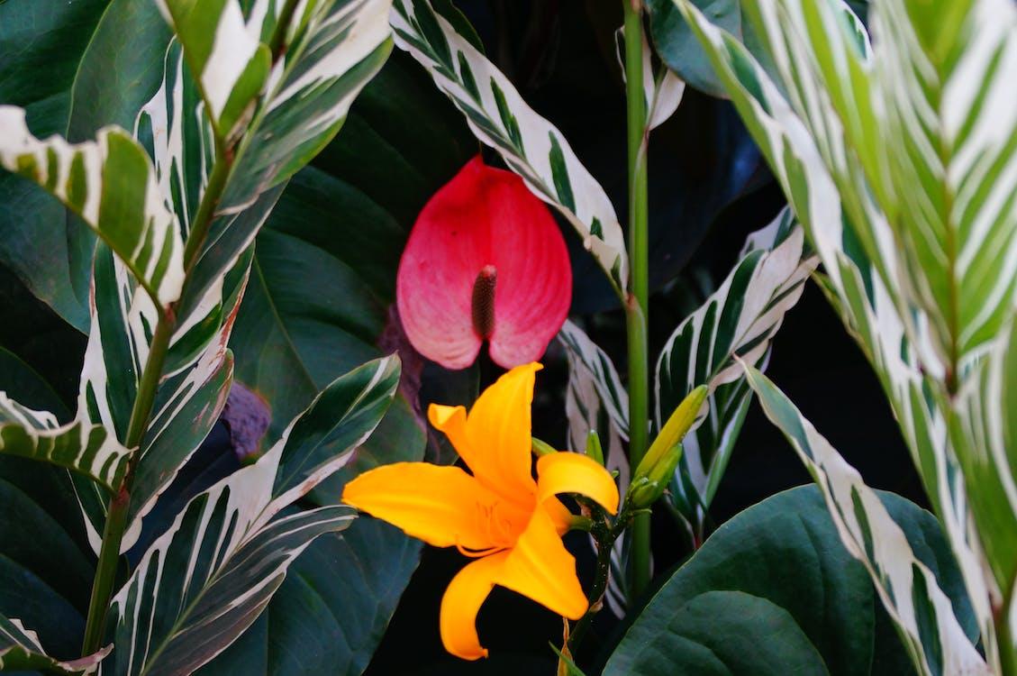 Free stock photo of beautful flowers in garden
