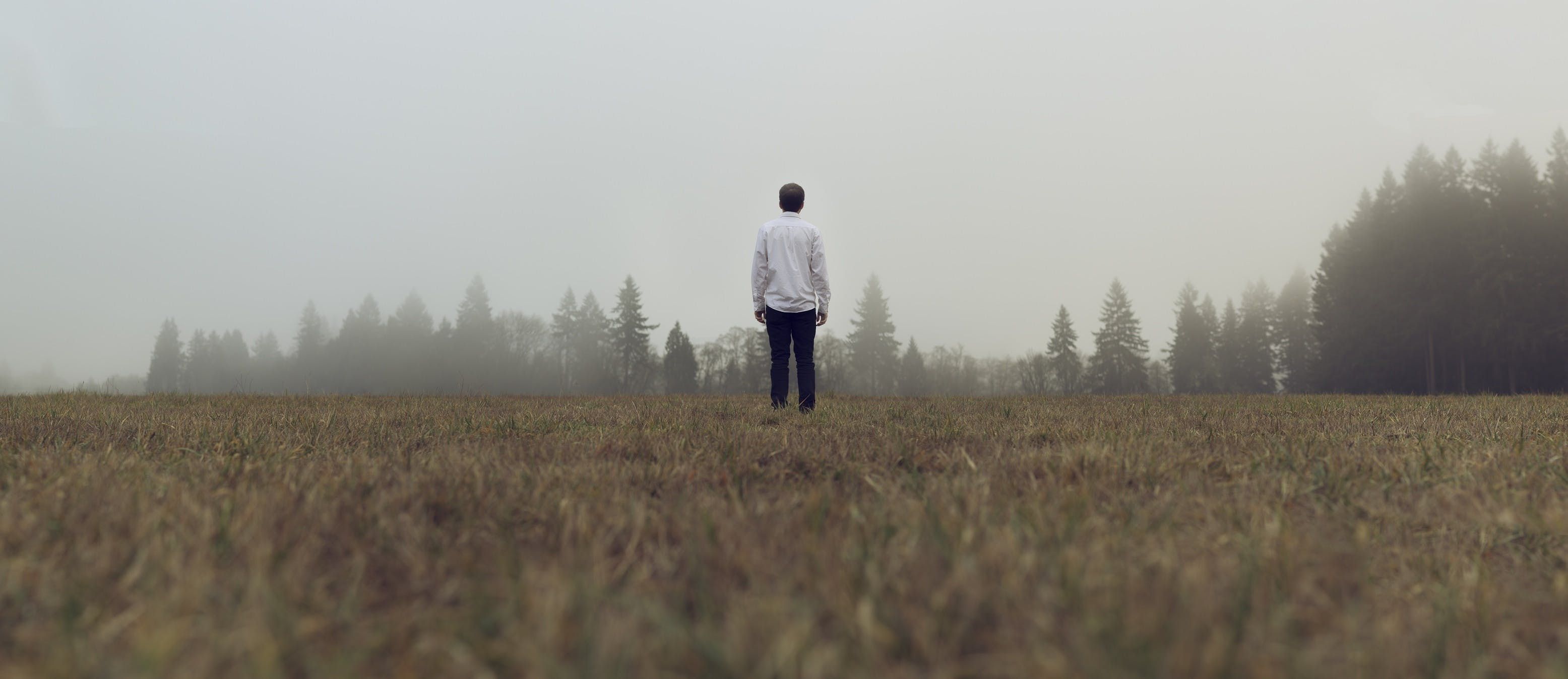 Free stock photo of field, fog, grass, guy