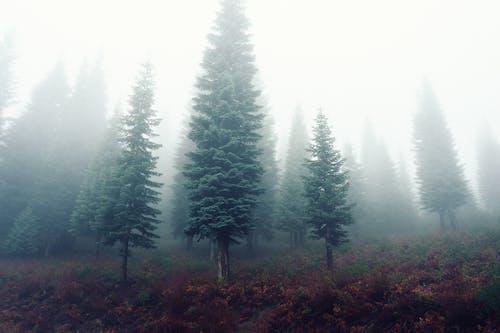 Darmowe zdjęcie z galerii z drzewa, las, mgła, mglisty