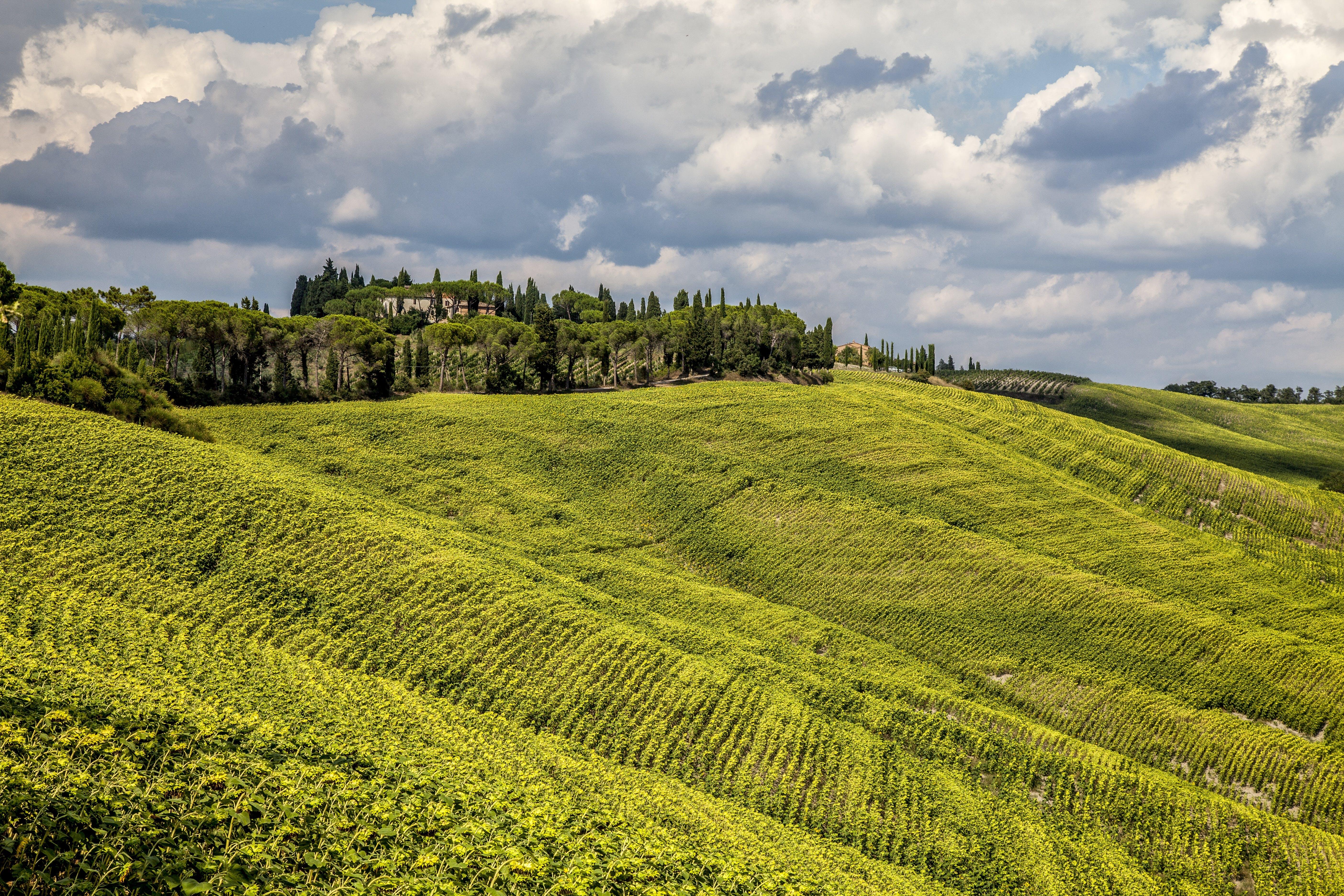 Free stock photo of landscape, nature, hill, vineyard