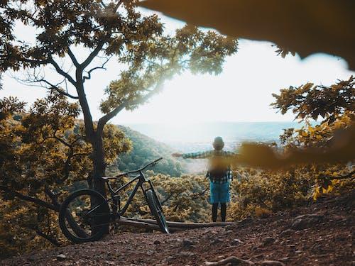 Immagine gratuita di alba, albero, andare in bicicletta