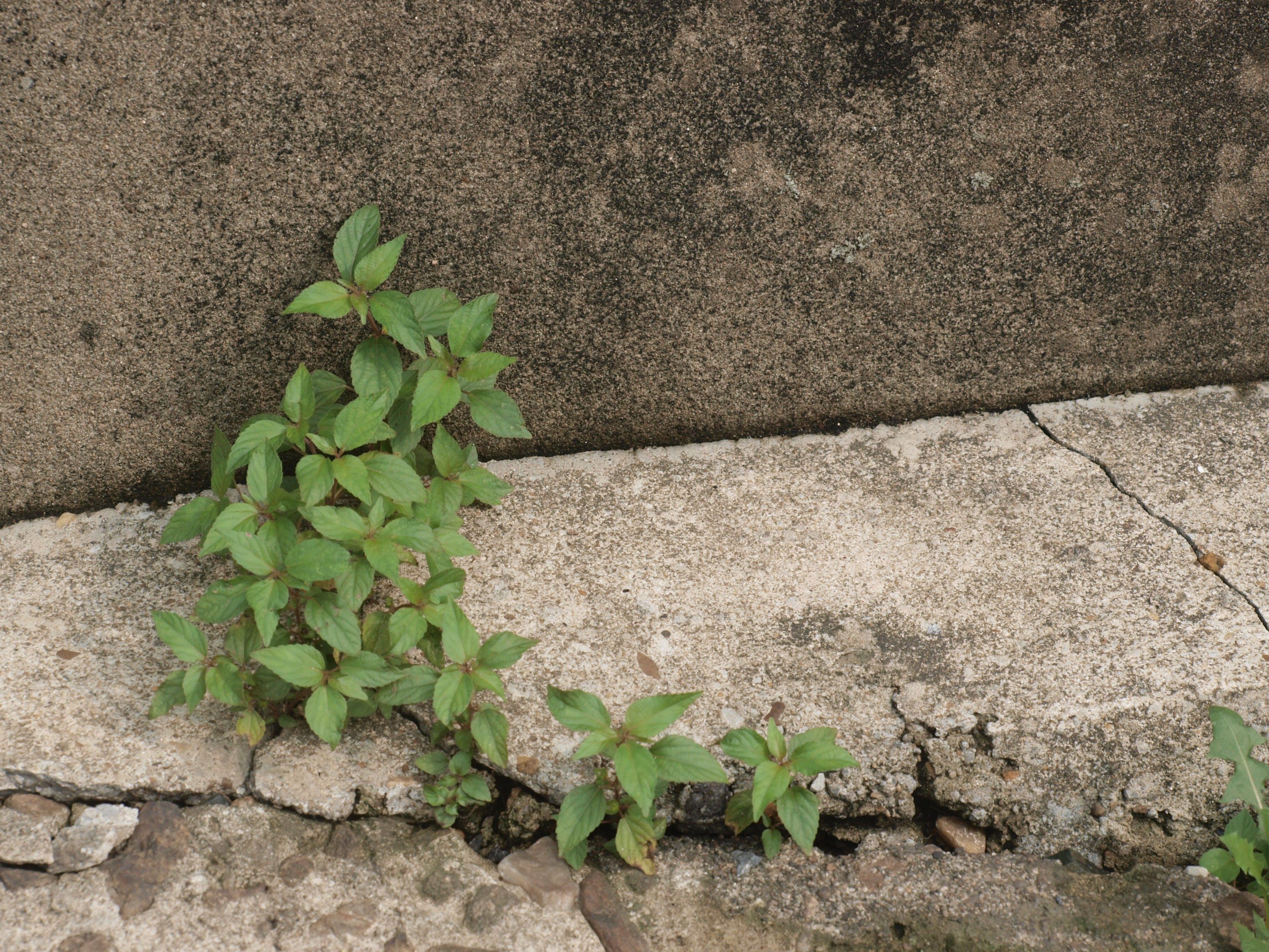 Gratis lagerfoto af grøn, grønt blad