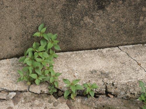 Immagine gratuita di foglia verde, verde