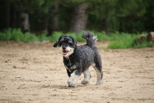 Fotos de stock gratuitas de adorable, animal, caminando