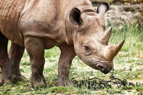 Бесплатное стоковое фото с большой, варварский, вымирающие виды, дикая природа