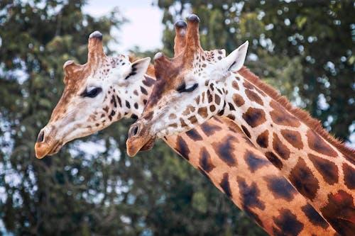 Δωρεάν στοκ φωτογραφιών με άγρια φύση, άγριος, βάρβαρος, γλυκούλι
