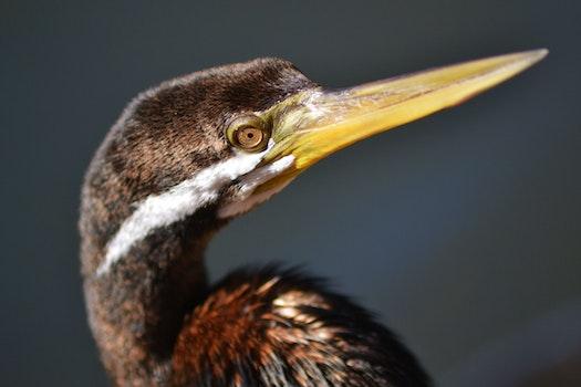 Close Up Photography of Brown Long Beaked Bird