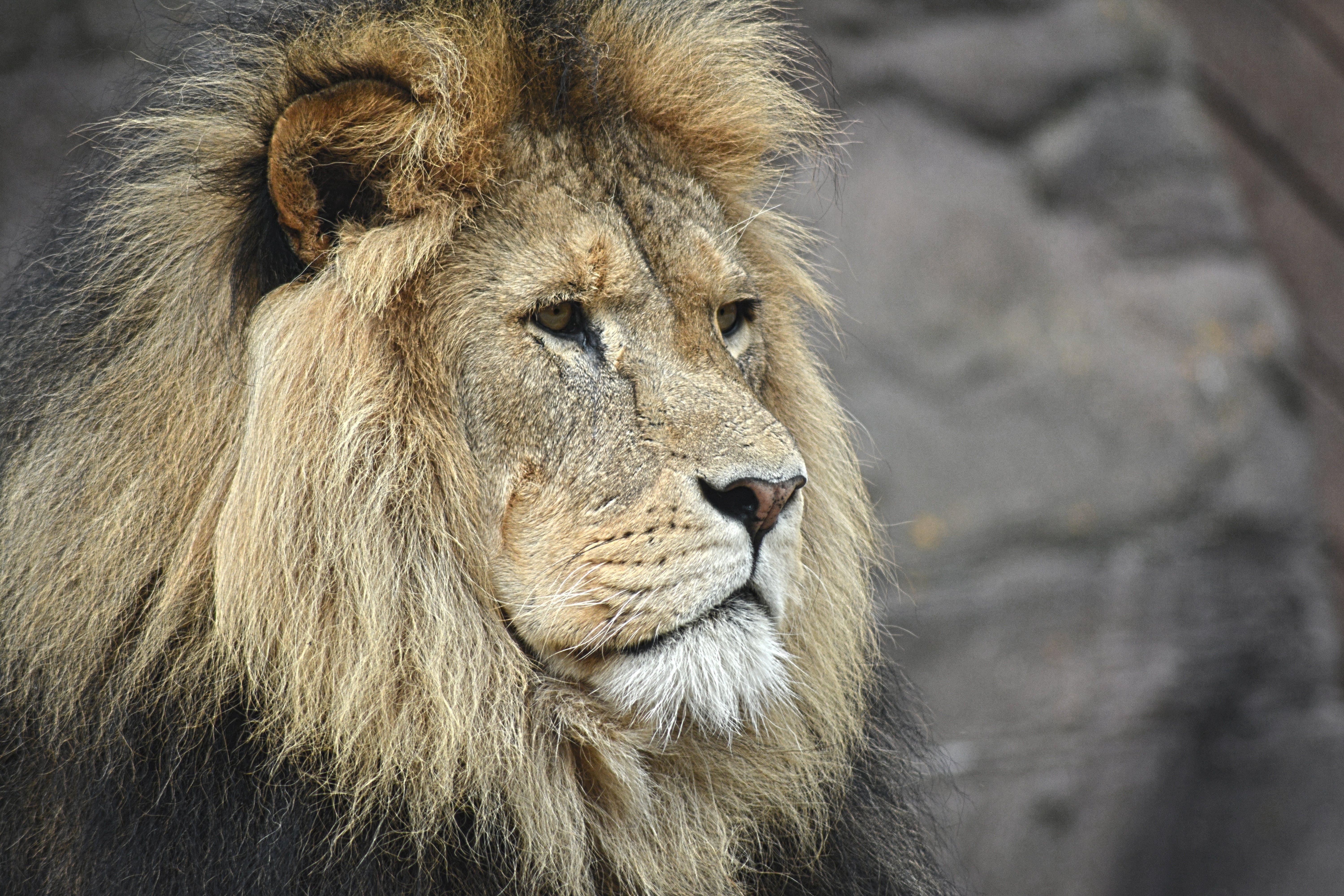 Free stock photo of africa, head, face, portrait