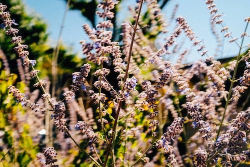 Blooming purple heather flowers on sunny field