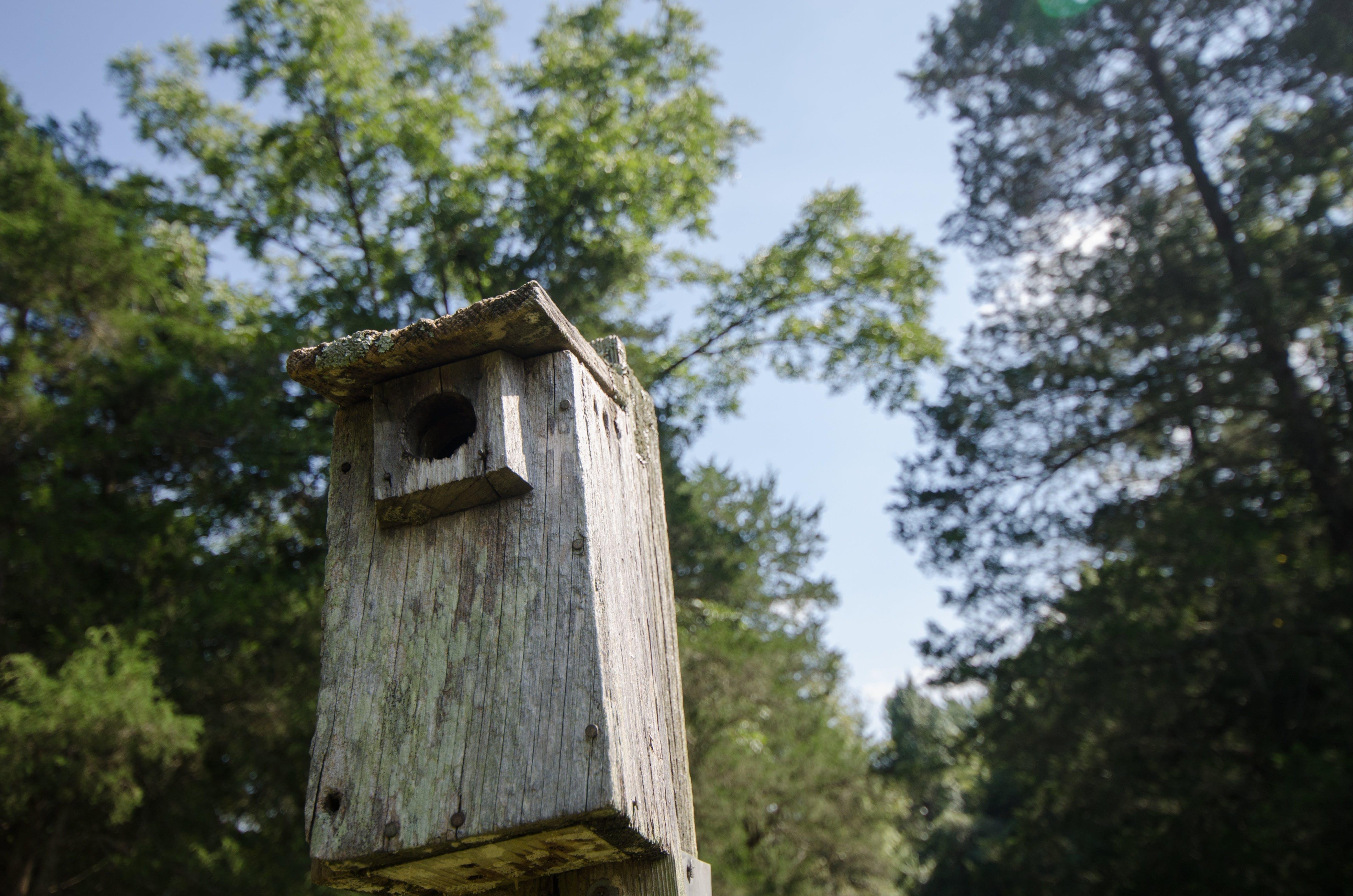 Free stock photo of wood, nature, bird, trees