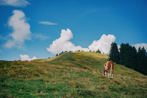 White and Brown Horse on Green Grass Field Under Blue and White Cloudy Sky