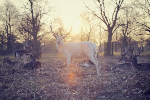 Free stock photo of sunset, trees, deers