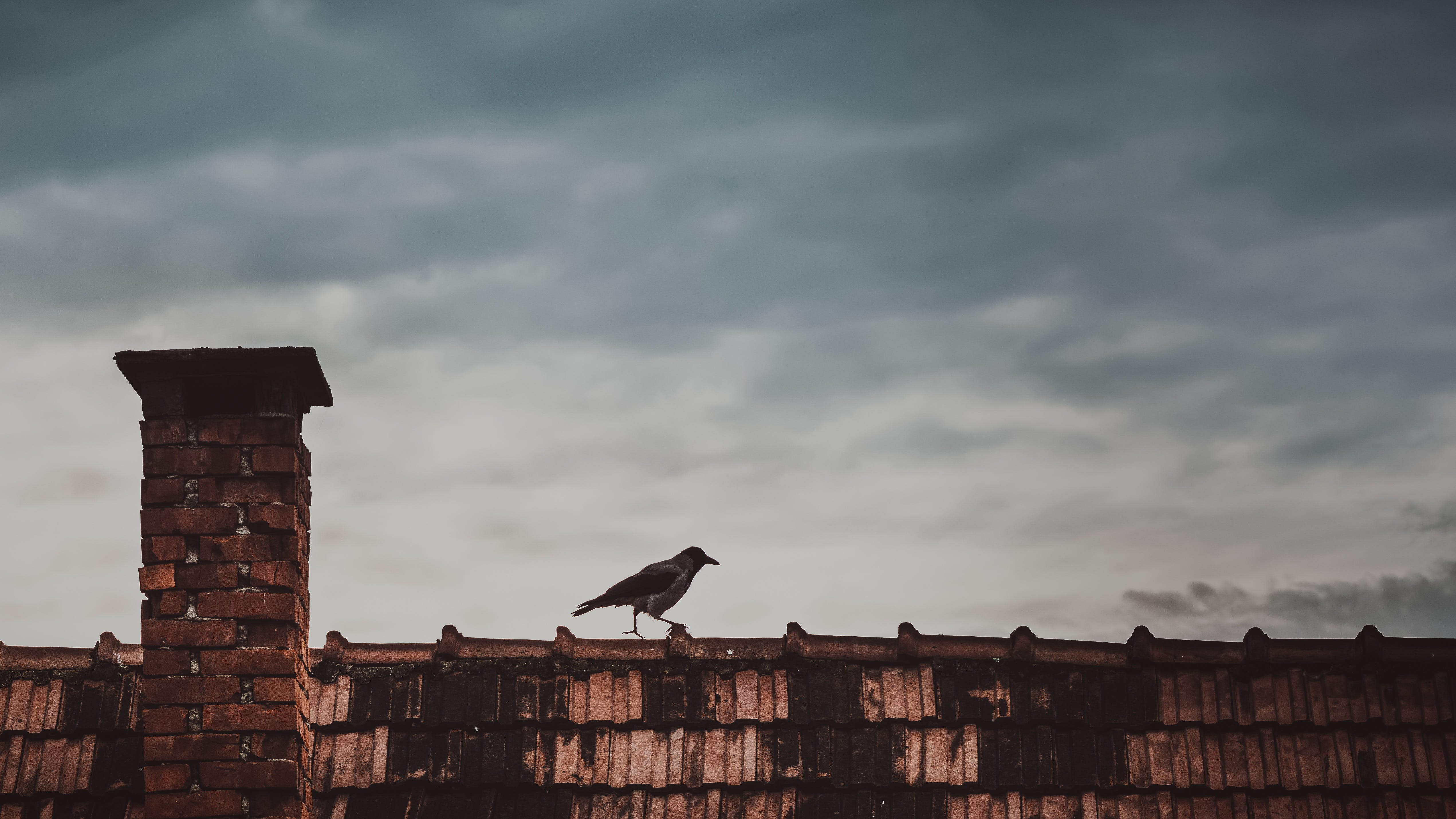 Free stock photo of sky, bird, clouds, roof