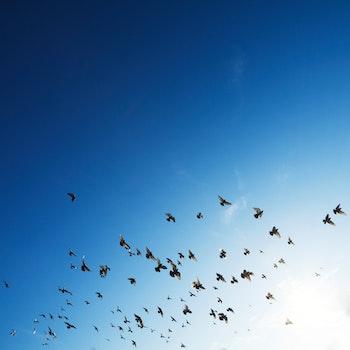 Free stock photo of nature, sky, flying, animal