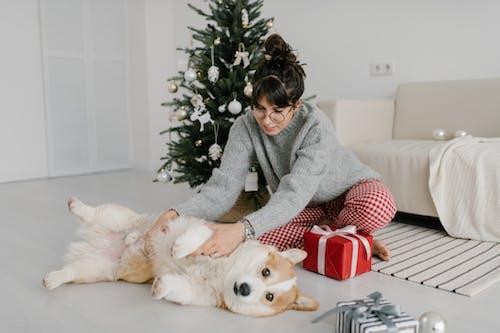 Woman Playing With Her Pet Corgi
