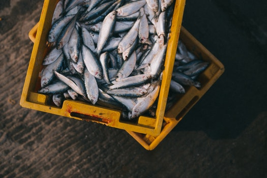Gray Fishes on Yellow Crate