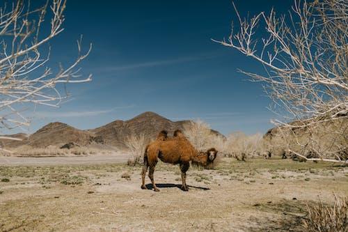 Ingyenes stockfotó ág, állat, állatvilág, barna témában