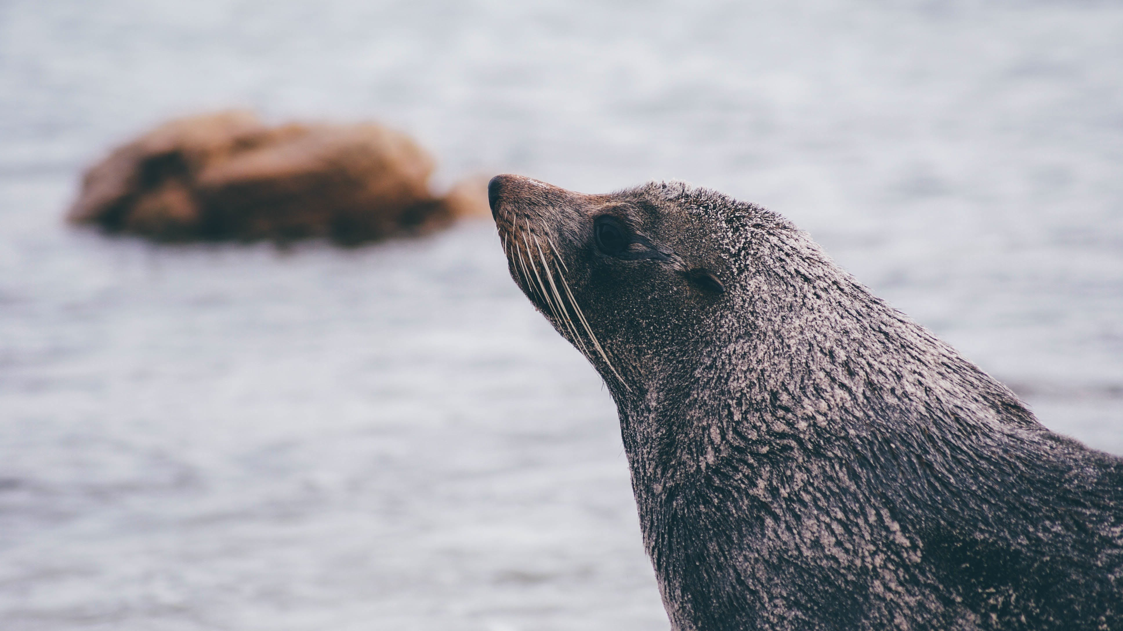 Black Seal Near Body of Water