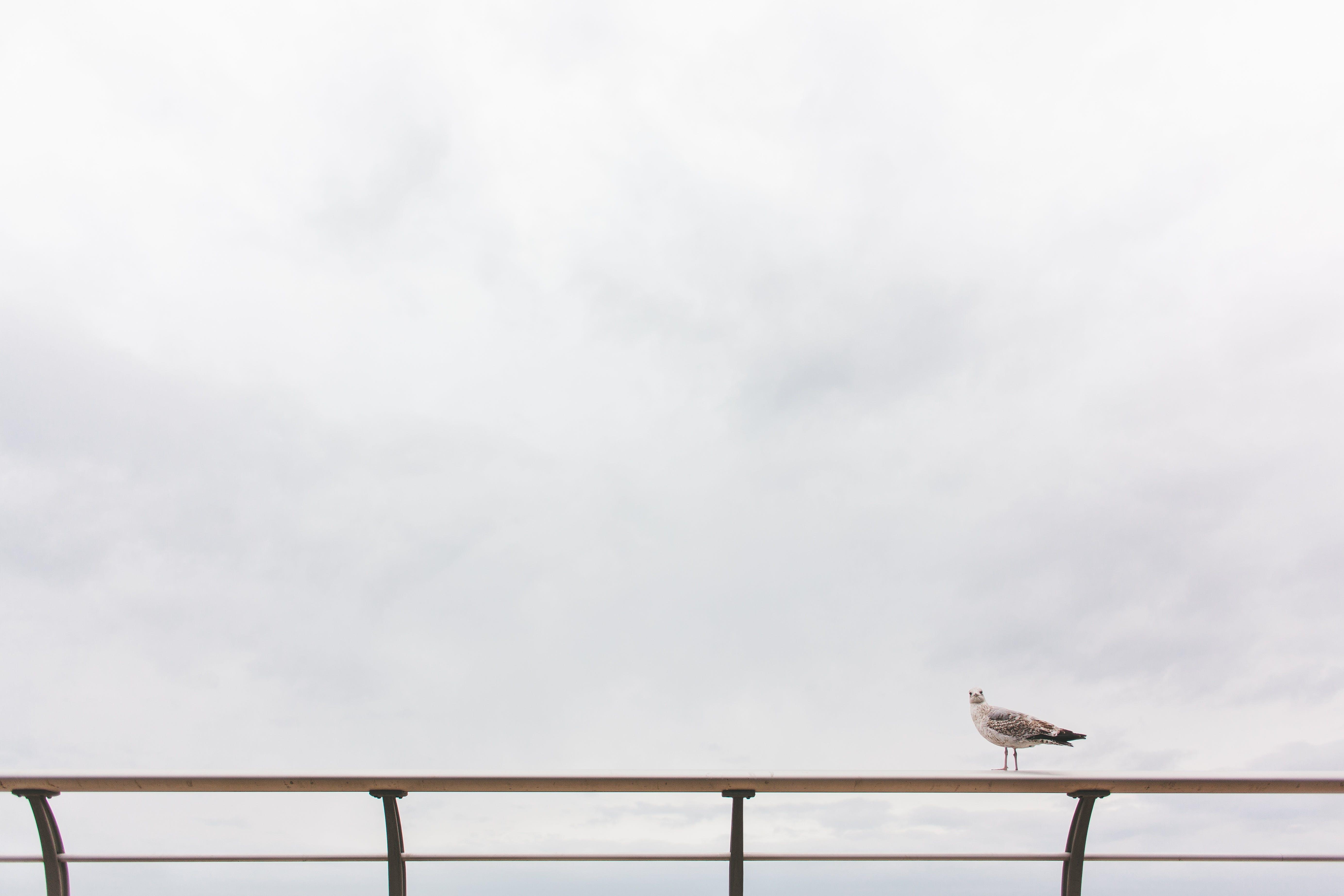 Free stock photo of nature, bird, animal, sitting